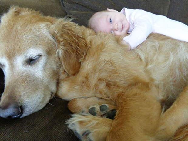 20 трогательных фотографий, доказывающих, что всем детям нужны домашние животные