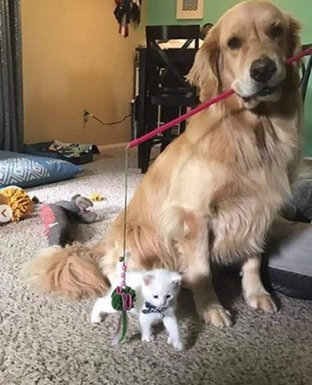 Собака с удочкой