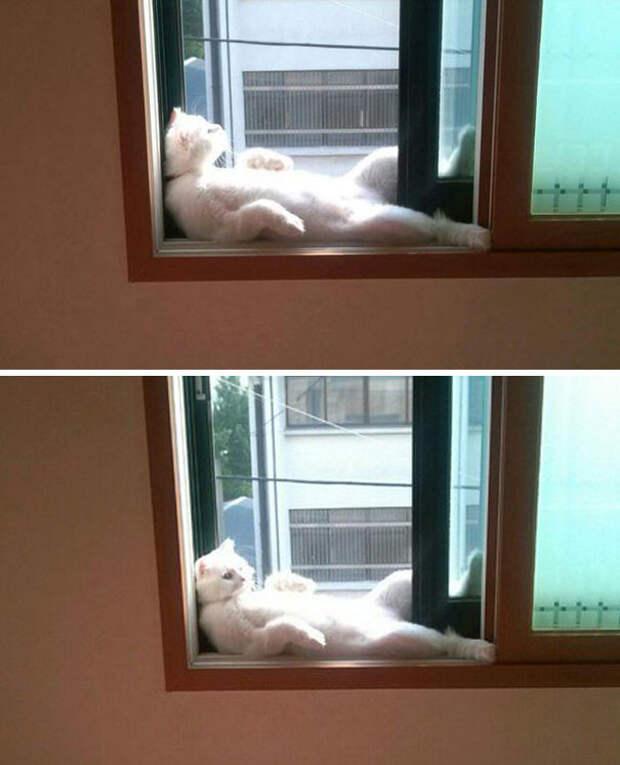 Радуется солнечным лучам, как в последний раз животные, котики, лучи, погреться, солнечные ванны, солнце, температура, тепло