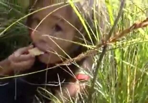 Заблудившаяся трёхлетняя девочка провела в лесу 11 дней… Но к счастью, кое-кто помог ей выжить!