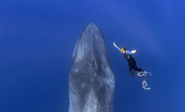 Самый большой кит в мире выплыл навстречу дайверу