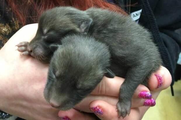 Мужчина нашел 5 щенят, но вскоре выяснилось, кто была их мама…