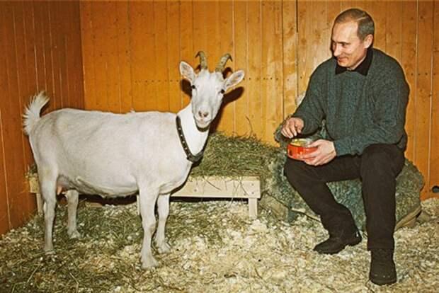 Путин и коза Сказка