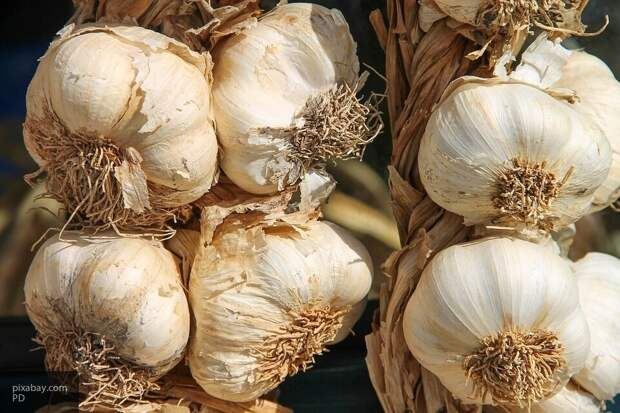Садоводам рассказали, чем полезно завязывание листьев  чеснока