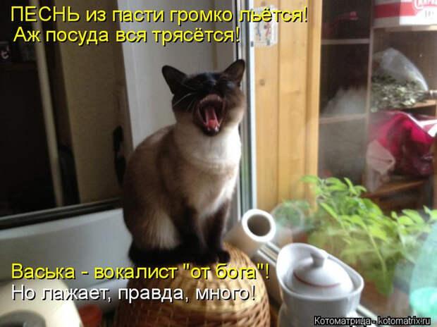 kotomatritsa_1Y (700x524, 335Kb)
