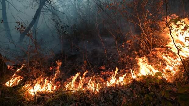 В Тюменской области ввели особый противопожарный режим