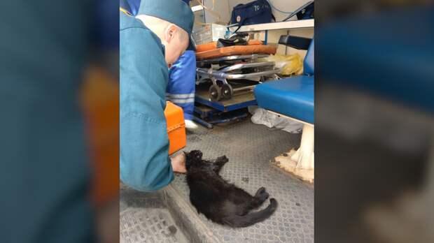 Спасатели реанимировали котенка с помощью кислородной маски