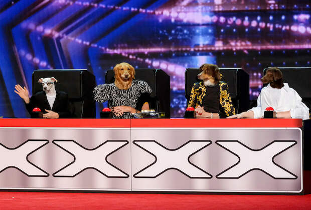 TV Ratings: AGT Dominates Tuesday in Return, New Amsterdam Rises