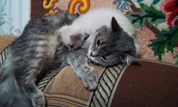 """Кошка """"украла"""" и притащила домой чужого котёнка, стала его мамой. Показываю эту милую парочку"""
