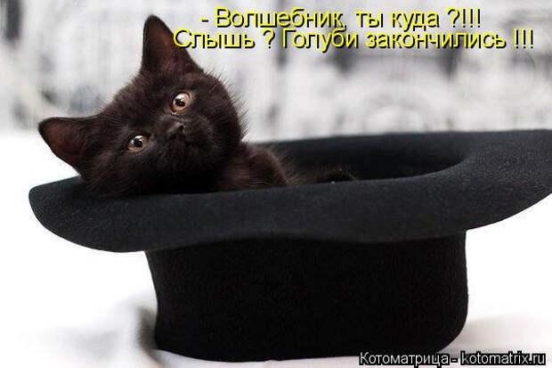 kotomatritsa_h4 (604x403, 116Kb)