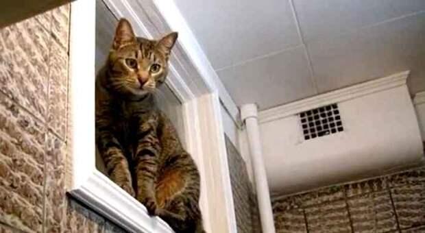 Это окно нравилось разве что вездесущим котам. /Фото: vdizayne.ru