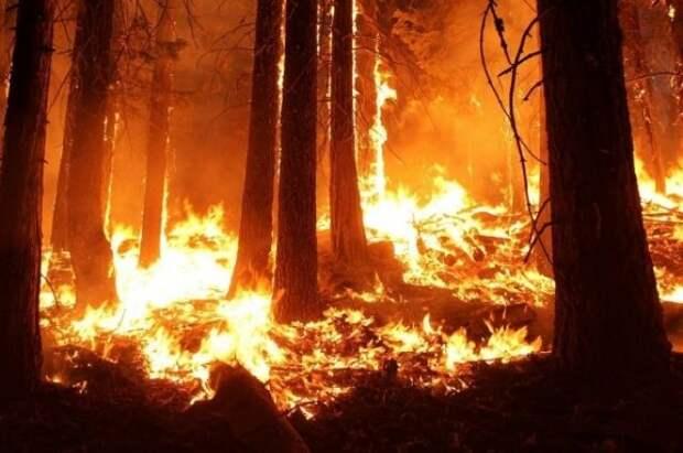 В России за сутки потушили 59 лесных пожаров