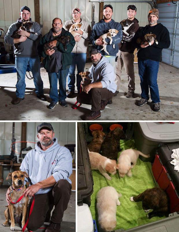 Бездомная собака привела участников мальчишника к своим семерым щенкам. Парни разобрали по домам всех, включая мать Счастливый конец, животные, спасение