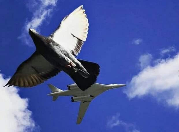Красивый дуэт двух птиц запечатлели в небе над Тушином