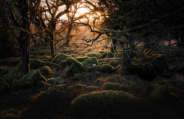 woodland floor by Timm Burgess on 500px.com