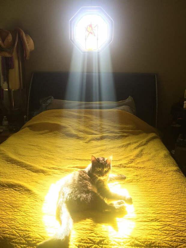 Один из Избранных животные, котики, лучи, погреться, солнечные ванны, солнце, температура, тепло