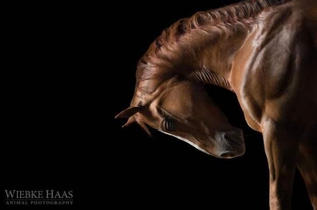 Поклон животные, искусство, лошади, фотография