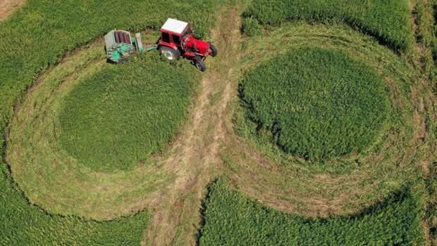 Деревья вместо овощей: заброшенным сельхозземлям хотят дать новый статус