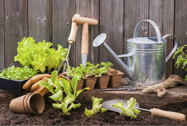 Огород без химикатов: 12 золотых советов
