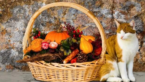 Австралийские ученые определили пользу овощной диеты для борьбы со стрессом