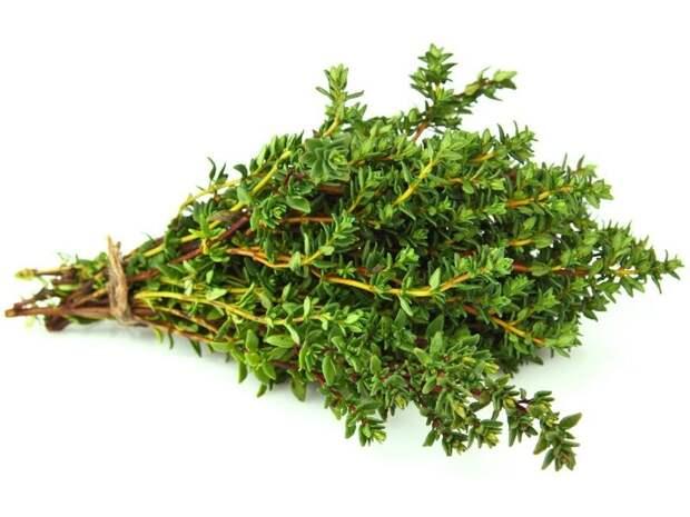 пряная трава тимьян