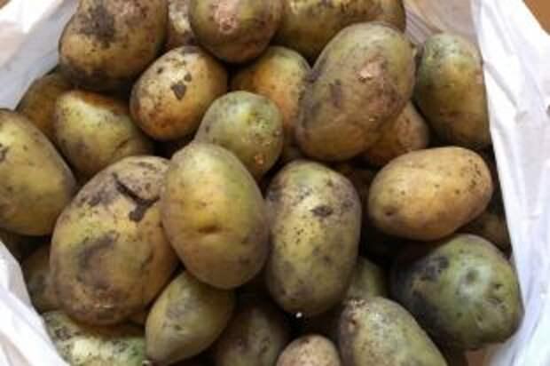 Как выбрать идеальную картошку для жарки, салатов и супов?