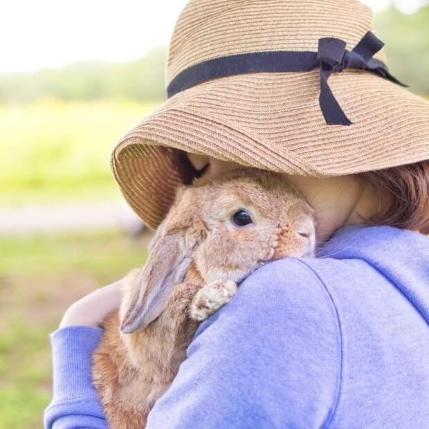 PuiPui — самый стильный кролик в мире животные, кролик, милота
