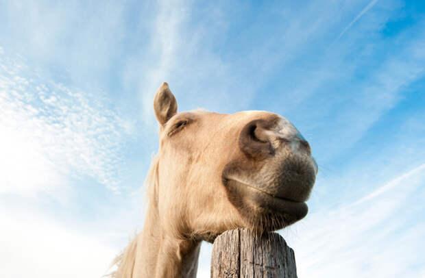 Как спят лошади: стоя или лежа?