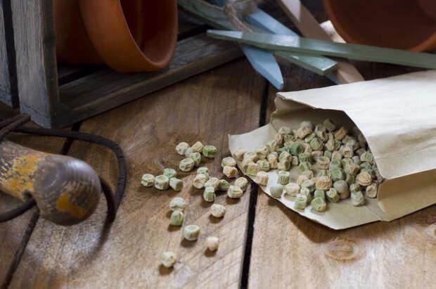 Не все семена, купленные у бабушки на рынке, могут оказать хорошими