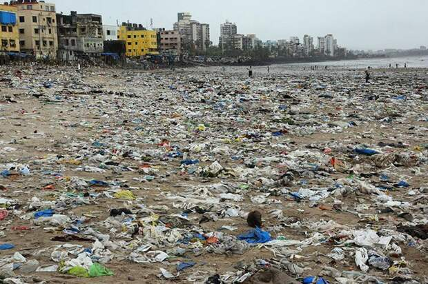 С пляжа в Индии убрали 5000 тонн мусора, чтобы спасти черепах животные, история, мусор, факты