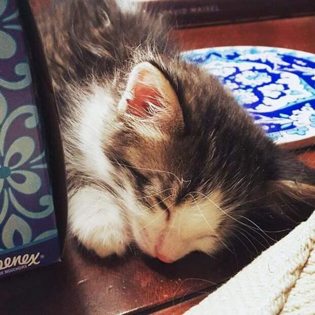 Парень нашел испуганного котенка под грузовиком и не смог сказать ему «Нет»!
