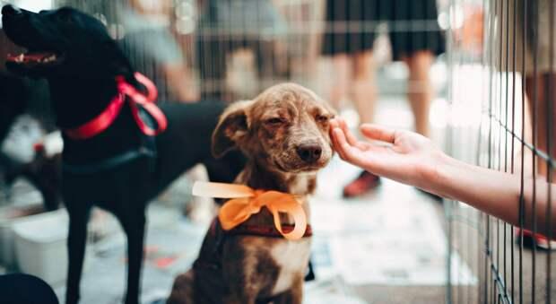 Еще не строящийся собачий приют Развожаев пообещал создать в этом году