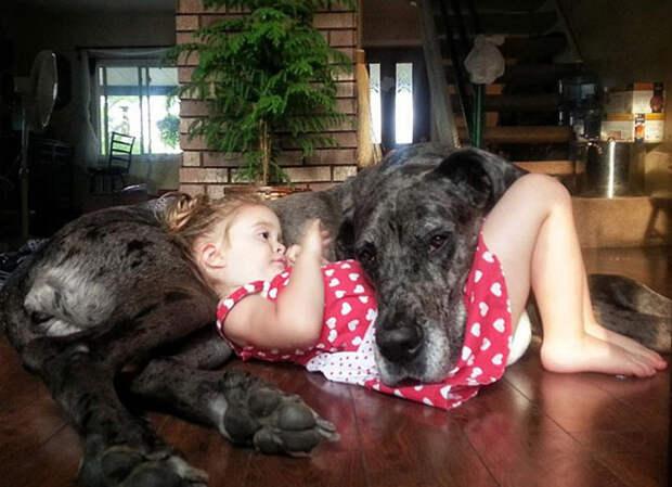 У тебя ещё нет собаки? Тогда вот 18 весёлых причин её завести!