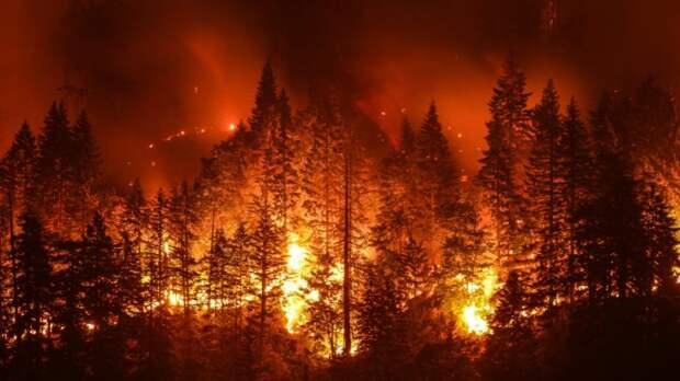 Лесные пожары: сотрудники МЧС, Минобороны и «Авиалесоохраны» тушат возгорания в Тюменской области