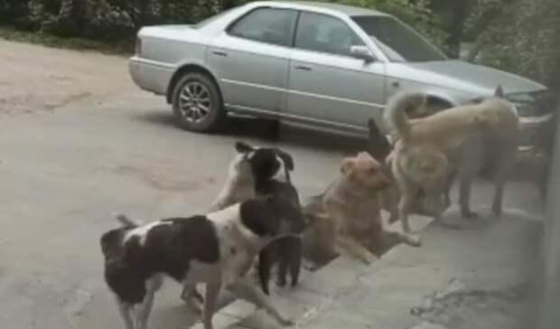 Жена неможет выйти издома: стая бродячих псов невыпускает приморцев изподъезда