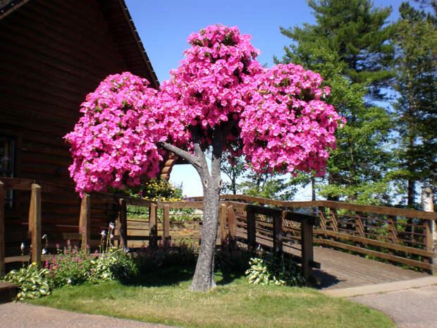 Превращаем сухое дерево в цветущее