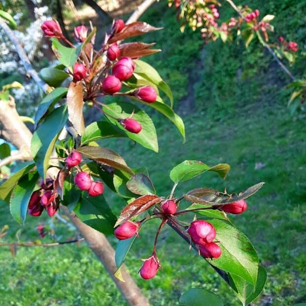 Майские цветы