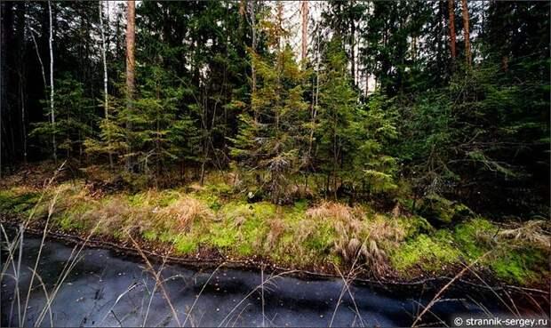 Деревья на болоте в осеннем лесу