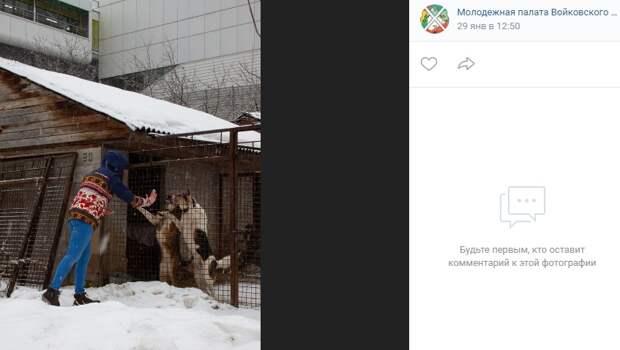 Почти полцентнера крупы передали молодые активисты из Войковского бездомным животным