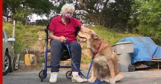 В США пес спас хозяйку в беде, позвав на помощь прохожего: видео
