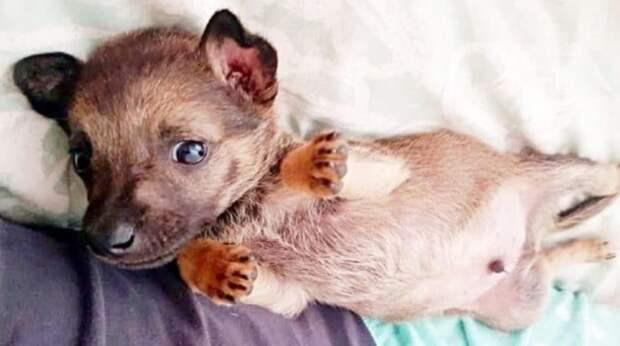 Безжалостность и надежда: маленький щенок чуть не погиб от камней малолетних живодеров
