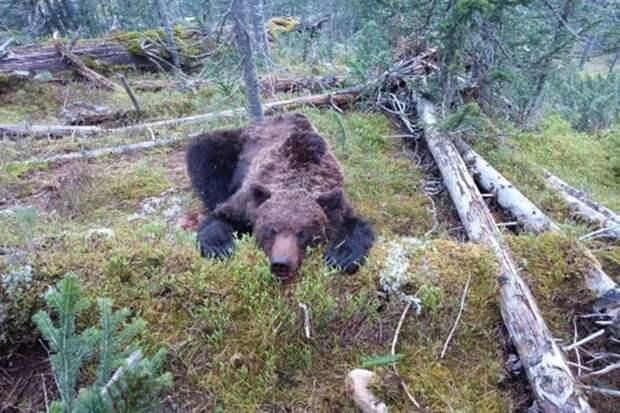 Как спастись при встрече с медведем
