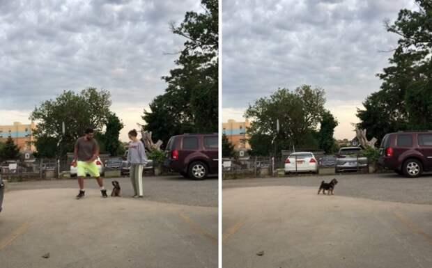 «Выбирай»: бесценная реакция собаки на проверку хозяев насмешит любого