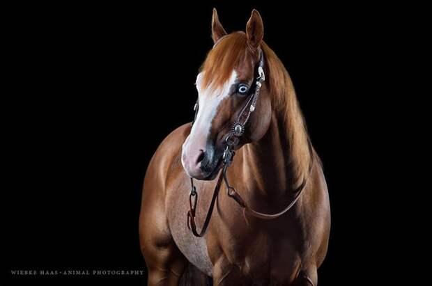 Ганшайн животные, искусство, лошади, фотография