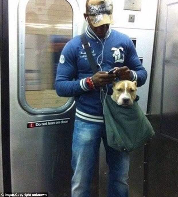 11. Забавные фотографии, домашние животные, животные прикол, кошки, переноска, собака в сумке, собаки, фото собак