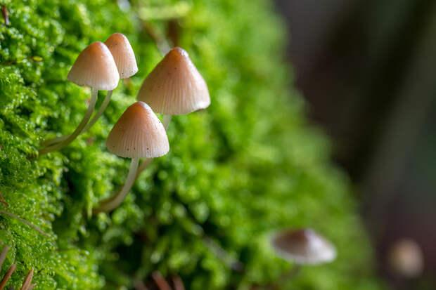 Жителей Канады будут лечить галлюциногенными грибами