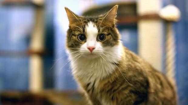 Московские ветеринары рассказали, как держать животных в хорошей форме