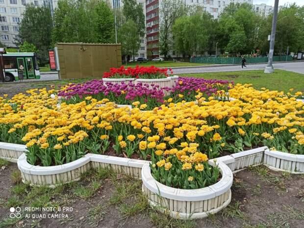 Жительница Алтуфьева запечатлела цветник у станции метро «Бибирево»