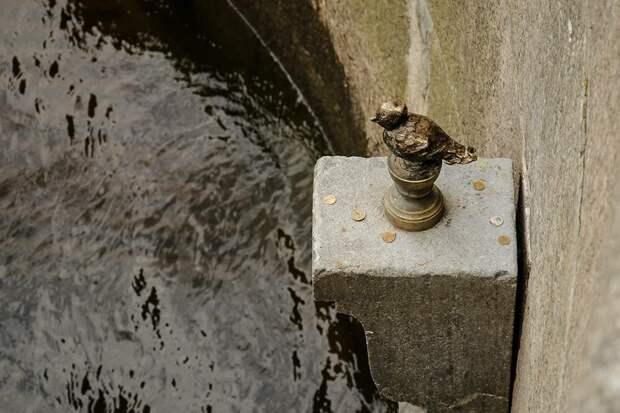 Чтобы сбылось желание, нужно кинуть Чижику-пыжику монетку. Нотак, чтобы она осталась лежать напостаменте, анеупала вводу. Источник: Tamara Selivanova / Shutterstock