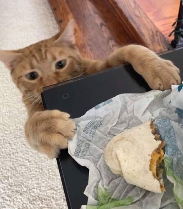 Кот Морковка всего из-за одного фото прославился в Сети и стал популярным